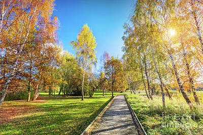 Photograph - Autumn Park With Colorful Trees, Falling Leaves On A Sunny Day. by Michal Bednarek