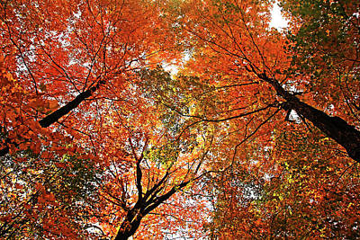 Photograph - Autumn Party by Debbie Oppermann