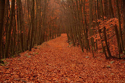 Photograph - Autumn Passage by Raymond Salani III