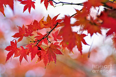 Maple Leaf Art Photograph - Autumn Pastel by Kaye Menner