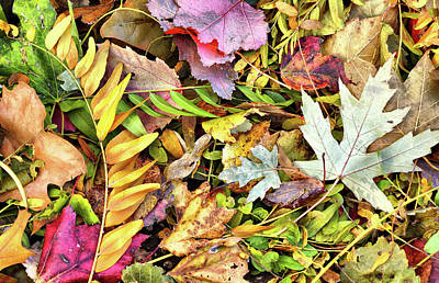 Photograph - Autumn Pastels by Cate Franklyn
