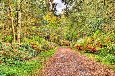 Photograph - Autumn Path by Chris Day