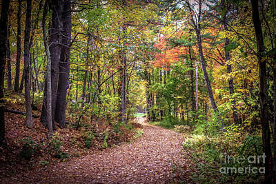 Photograph - Autumn Path by Claudia M Photography