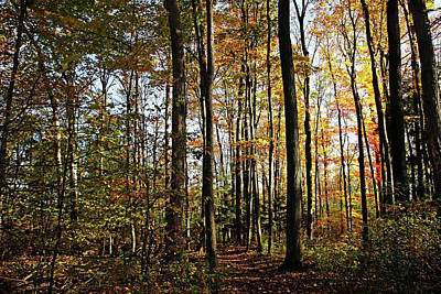 Photograph - Autumn Path by Debbie Oppermann