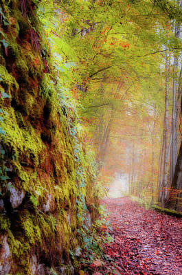 Photograph - Autumn Path by Geoff Smith