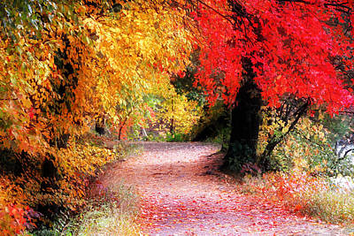 New Hampshire Tours Photograph - Autumn Path II by William Carroll