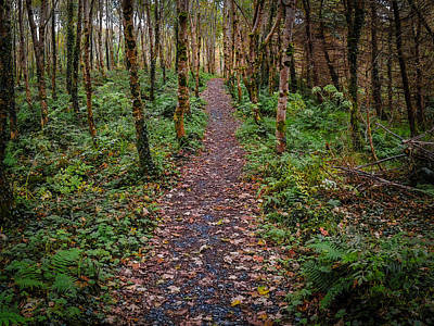 Photograph - Autumn Path In Lissycasey Wood by James Truett