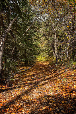 Photograph - Autumn Path In Spearfish Canyon by Ray Van Gundy