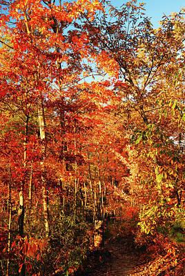 Photograph - Autumn Path by James Kirkikis