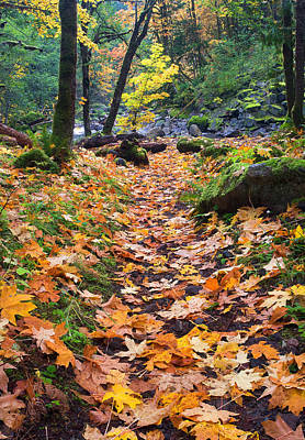 Path Photograph - Autumn Path by Mike  Dawson