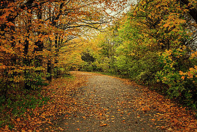 Photograph - Autumn Path by Mike Santis