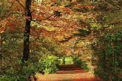 Photograph - Autumn Path by Peter Skelton