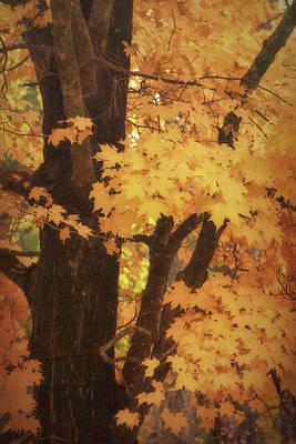 Photograph - Autumn Path  by Saija Lehtonen