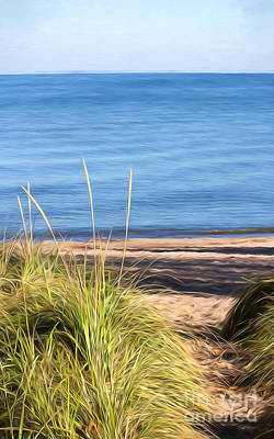 Photograph - Autumn Path Through Beach Grass by Barbara McMahon