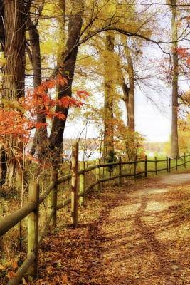 Photograph - Autumn Pathway by Jean Goodwin Brooks