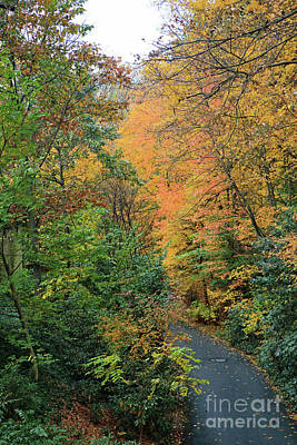 Photograph - Autumn Pathway by Mary Haber