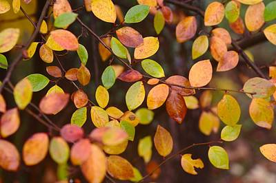 Photograph - Autumn Pattern With Red, Green, And Yellow Leaves by Yana Shonbina