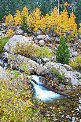 Photograph - Autumn Peace by Gary Lengyel