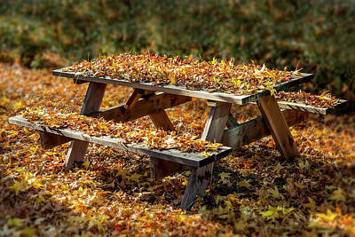 Photograph - Autumn Picnic by Kelley King