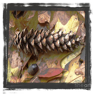 Photograph - Pine Cone Autumn Colour by Sueann Hack