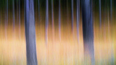 Art Print featuring the photograph Autumn Pine Forest Abstract by Dirk Ercken