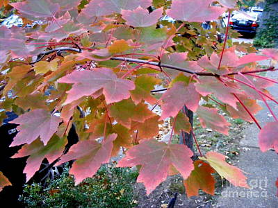 Photograph - Autumn Pink 2 by Nancy Kane Chapman