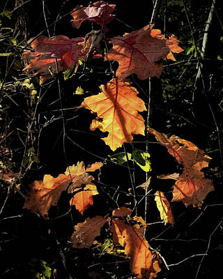 Photograph - Autumn Poetry by Jim Hill