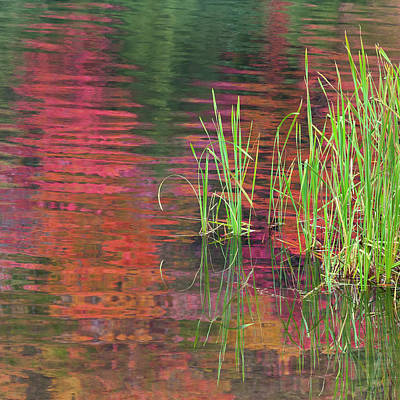 Photograph - Autumn Pond Colors by Alan L Graham