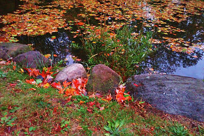 Photograph - Autumn Pond Edge by Roger Bester