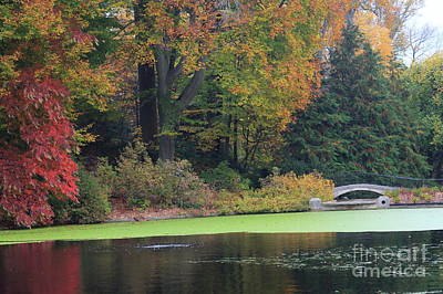 Photograph - Autumn Pond IIi by Mary Haber