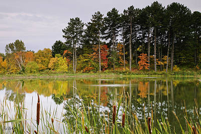Autumn Pond Art Print by Phill Doherty