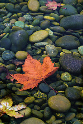 Photograph - Autumn Pool 2017 by Steven Richman
