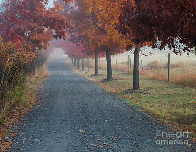 Photograph - Autumn Portal by Idaho Scenic Images Linda Lantzy