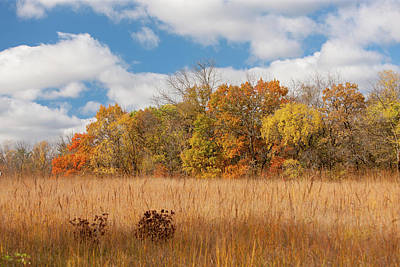 Photograph - Autumn Prairie by Bernard Lynch