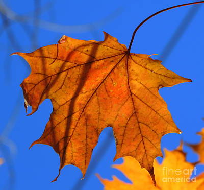 Photograph - Autumn Praise by France Laliberte