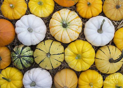 Autumn Pumpkin Pattern  Art Print