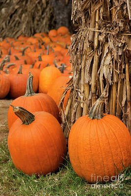 Photograph - Autumn Pumpkins by Jill Lang