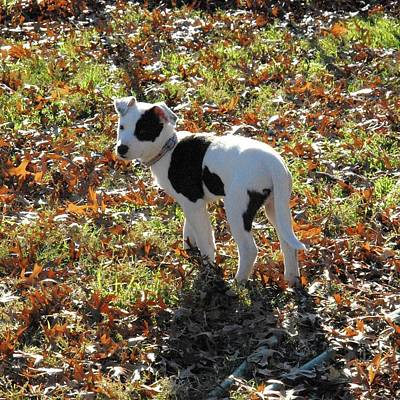 Photograph - Autumn Puppy by Cheryl Poland