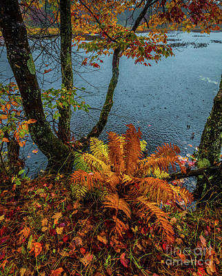 Photograph - Autumn Rain 1 by Roger Monahan