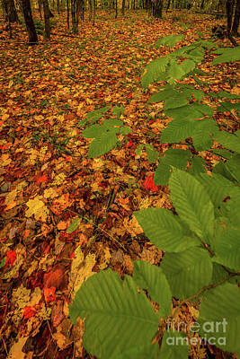 Photograph - Autumn Rain 4 by Roger Monahan