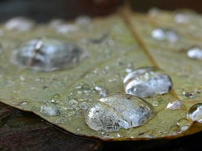 Graduation Sayings - Autumn Rain by Juergen Roth