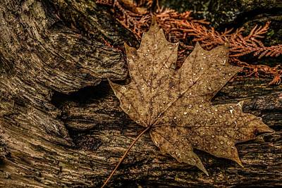 Photograph - Autumn Rain by Karl Anderson