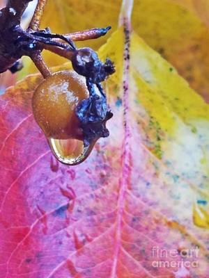 Photograph - Autumn Rain by Maria Urso
