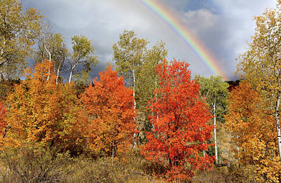 Photograph - Autumn Rainbow by Kathleen Bishop
