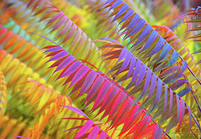 Photograph - Autumn Rainbow Of Leaves 1 by Jenny Rainbow