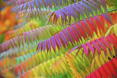 Photograph - Autumn Rainbow Of Leaves by Jenny Rainbow