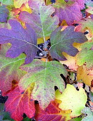 Autumn Rainbows Original