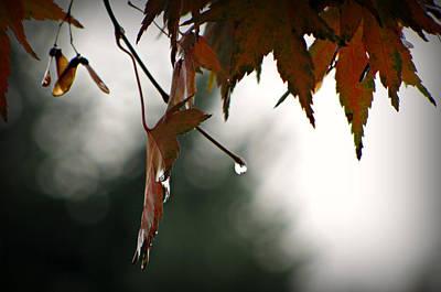 Photograph - Autumn Raindrops by Katie Wing Vigil