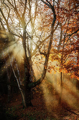 Photograph - Autumn Rays by Susan McMenamin