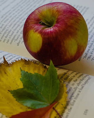 Photograph - Autumn Reading by Stephanie Maatta Smith